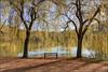 Rideau de verdure .... au lac de Chasteaux en Corrèze (lo46) Tags: france automne lac arbres paysage banc feuilles corrèze limousin carpediem brive saulepleureur lo46 canon60d chasteaux lacdechasteaux betterthangoodlevel3 artistoftheyearlevel2