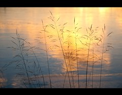 The first morning light (Kristin Sig) Tags: morning winter sunlight nature straw straws sunrice s str morgunn