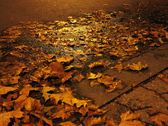The snow has melted again ~ (rotraud_71) Tags: wet night slippery streetlighting lateautumn leavesofsycamoretrees