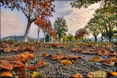 (0355) Sonidos de otoo (Pablo Arias) Tags: madrid autumn trees espaa naturaleza nature colours arboles colores nubes otoo hdr smrgsbord composicin paracuellos photomatix sigma1020 colorphotoaward olequebonito nikond300 pueblosdemadrid greatmanipulart grouptripod oltusfotos goldenvisions pabloarias