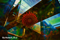 A Flowering Abstract (Hutech_f2.2 (I'm staying too!)) Tags: abstract flower colour cafe image grove australia blended wodonga