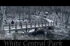 White Central Park explore 6/12/12 #301 (Cool Photo by Jose Manuel Diaz) Tags: snow newyork centralpark manhattan nieve nuevayork mygearandme mygearandmepremium mygearandmebronze mygearandmesilver rememberthatmomentlevel1 rememberthatmomentlevel2 rememberthatmomentlevel3