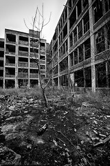 Packard Plant-Detroit, MI (Mike Boening Photography) Tags: blackandwhite tree abandoned trash ruins detroit packard urbanexploring packardplant urbex nikond600