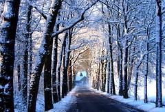 Way Home (Robert-Jan van Lotringen) Tags: road christmas xmas trees winter light sun white house snow cold holland window pov lane