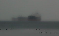ghosts0009 (beelzebub2011) Tags: canada silhouette fog vancouver britishcolumbia ships seawall stanleypark freighters