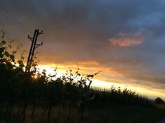 (Ira H.) Tags: markgrflerland vineyards sunset