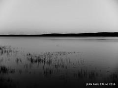 Soir de calme (JEAN PAUL TALIMI) Tags: bw nature vent noiretblanc lac vague campagne blanc roseaux calme seul landes sudouest biscarrosse talimi