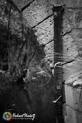 Curiosidad (NicPic Spot) Tags: museo moneda segovia alcazar muralla monocomo monocromatico luminosidad colores familia retrato modelo molino agua energa electricidad lluvia paseo nivel curiosidad medidor escondites rincones rio publicidad ejemplo puente nahuel ibaez ibanez photography fotografia canon 7 d 7d eos 50 mm 50mm arquitectura ingenieria restaurante hipster mirada vans chico plantas naturaleza cultura aire libre nuevo espaa movimiento velocidad lenta contraste terraza balcon contraluz color canales canal logo sentado