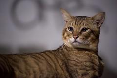 DSC05776 (C*A(t)) Tags: cat straycat taiwan taipei taipets sony a7s