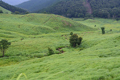 38Tonomine Highland (anglo10) Tags:   japan field