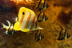 Acuario Agosto 2016 (83) (Fernando Soguero) Tags: acuario zaragoza acuariodezaragoza aragn turismo aquarium nikon d5000 fsoguero fernandosoguero