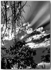 Listen... (Mike Goldberg) Tags: sunrise clouds branches rays light silhouette canong16 jerusalemvicinity mikegoldberg hmbt