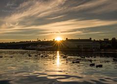 Happy Friday sunrise with the ducks. (Brendinni) Tags: sunrise seattle lakeunion mohai ducks fowl burst water ripples color richness morning wild buildings blue orange