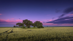 Oasis (Radisa Zivkovic) Tags: tree agriculture sunset clouds purple field travel wheat crops lone solitude idyllic tranquil plain horizon dusk sunrise dawn woods vastness sky blue serbia titel panrama cinematic beautiful