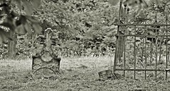 DSC_0029n wb (bwagnerfoto) Tags: meknyes baranya temet cementery grave headstone monochrome blackwhite landscape tjkp landschaft serene mystic outdoor depthoffield