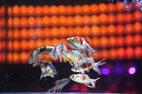 Art Aquarium Osaka