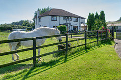 Pebble Mill guesthouse (Jonathan Palfrey) Tags: photo digital photomatix exposurefusion landscape house bedandbreakfast garden horse kinsaley leinster ireland