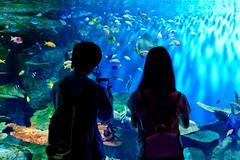 Lovers in Shinagawa Aquarium :  (Dakiny) Tags: japan tokyo shinagawa shinagawaku katsushima outdoor city street park aquarium shinagawaaquarium people couple lovers boy girl man woman dark color bokeh nikon d7000 nikkor 35mm f18g afsdxnikkor35mmf18g nikonafsdxnikkor35mmf18g club it