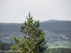 am Aussichtsturm (cd2104) Tags: landschaft tanne