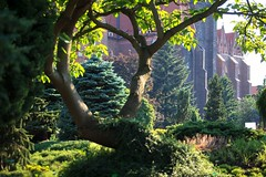 Ogrd botaniczny Uniwersytetu Wrocawskiego / The Botanical Garden of the University of Wroclaw (PolandMFA) Tags: polska poland wrocaw wroclaw atrakcje attractions ogrdbotaniczny botanicalgarden
