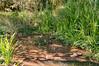 160827_PMN Refugio das Aves_013 (Luiz Henrique Foto) Tags: luizhenriquefoto luizhenriquephoto autoral bragança bragançapaulista bragançapaulistasp brook coletivosocioambiental coletivosocioambientaldebragançapaulista creek desenhandoaluz eco ecologia estadodesãopaulo fotoexterna fotografiaautoral fotografiadenatureza fotojornalismo luizhenriquefotografia natureza ong organizaçãonãogovernamental pnmrefúgiodasaves parque parquenaturalmunicipalrefúgiodasaves riacho ribeirão rivulet sp stream sãopaulo terceirosetor unidadedeconservação wwwluizhenriquefotocombr ©luizhenriquerocharodrigues áreaverde brasil br outputphoto