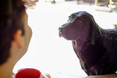Good Dog! (Bhlubarber) Tags: alberta carvel family holiday parkland prairies summer chill