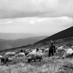 The Shepherd thumbnail