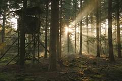 altes Hochsitz (izoll) Tags: izoll sony alpha77ii wald waldaufnahmen natur sonnenstrahlen lichtundschatten lichtstrahl naturaufnahmen bume hochsitz