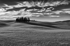 Morning shadows (Agrippino Salerno) Tags: bw blackandwhite italy hills tuscany valdorcia monochrome cypress grove clouds light agrippinosalerno canon manfrotto shadow trees travel beautiful sanquiricodorcia