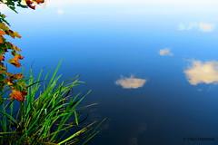 pilvet_vedess (Paivi Hannele) Tags: finland ourfinland landscape luonto kasvi maisema vesi puut thisisfinland joki jrvi syksy autumn