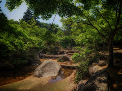 A Natural Japanese Garden (Martin Smith - Having the Time of my Life) Tags: japanesegarden japan2016 japan mtmisen miyajimaisland azalea nikond750 martinsmith martinsmith japanesemaple nikkor2485mmf3545gedvr 4photopano pano panorama hatsukaichishi hiroshimaken jp landscape outdoor stream boulder littlewaterfalls