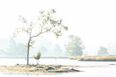 On a sunny day (Renate van den Boom) Tags: 09september 2016 boom europa gelderland hatertsevennen jaar landschap maand meer natuur nederland renatevandenboom