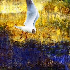Brown-headed gull with twig (Tedje51) Tags: bird gull