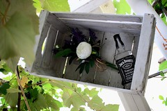 Flower Jack (Chris_DP) Tags: jack daniels flower bar explore life street stilllife still black white tree leaf rose bottle happy hour drink alcool wood glass