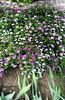 Flowers in Balchik botanical garden (cod_gabriel) Tags: bulgaria balchik balcic dobrogea dobruja dobrudja cadrilater botanicalgarden grădinăbotanică gradinabotanica flowers flori