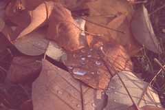 (...cathrine) Tags: autumn red detail rot water leaves rain foglie vintage drops herbst retro foliage indie bltter autunno pioggia malinconia tropfen reddish malinconico cinematographic rtlich melancholie melancolic redtones melancholisch gocciola