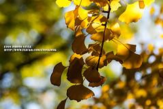 DSC_0528 (Etonkwok) Tags: autumn night beijing  mingtombs  tiananmensquare mutianyu thegreatwall         templeofazureclouds mingdingtomb thexiangshanpark