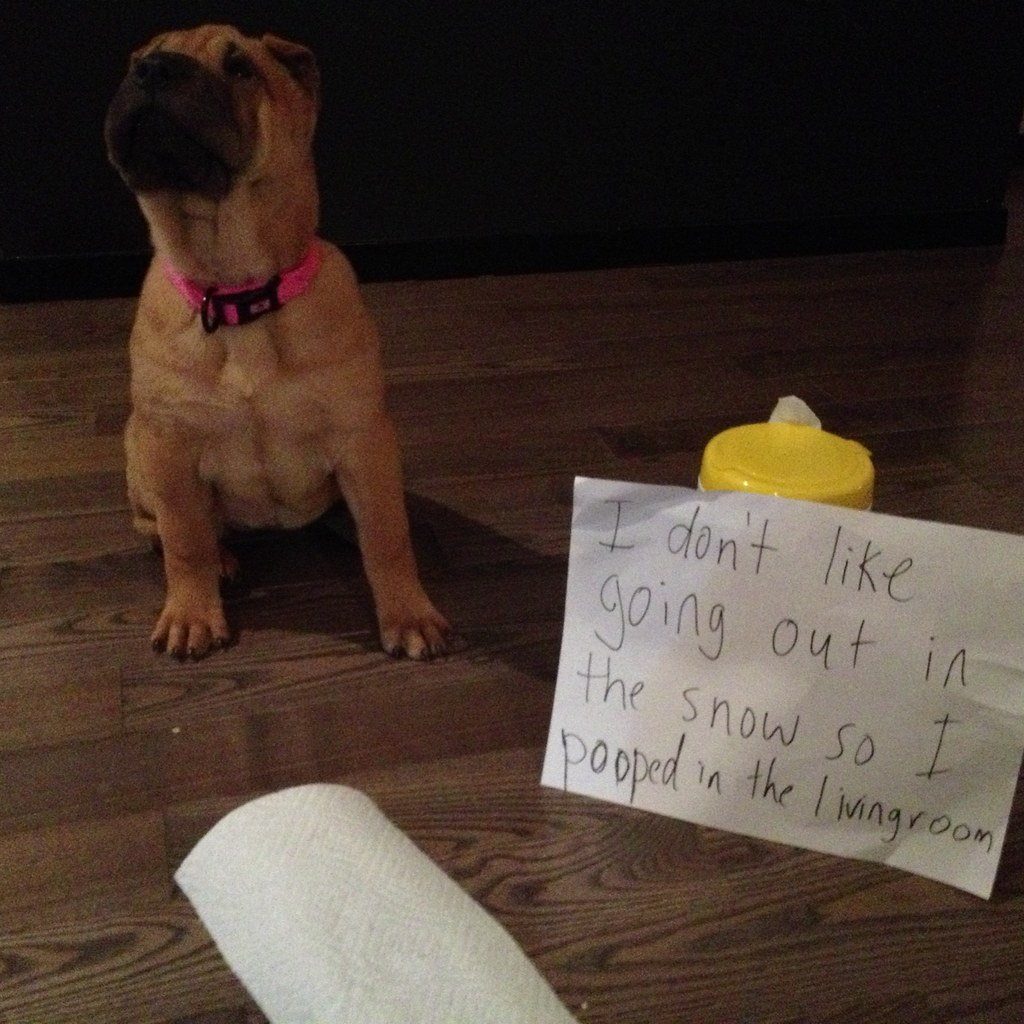 Dog Shaming by shareski, on Flickr
