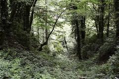 Mtirala National Park, Georgia (, საქართველო) (bm^) Tags: park travel zeiss forest georgia bomen nikon reis boom national carl caucasus bos parc sakartvelo reizen batumi woud adjara georgië საქართველო ბათუმი planart1450 d700 zf2 planar5014zf nikond700 начинизавиждане mtirala