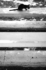 (bebo82) Tags: sea blackandwhite bw lake cat lago mare pentax galilee gatto biancoenero tiberias capernaum galilea cafarnao tiberiade pentaxk20d pentaxk20