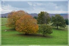 Basaburua (EnriqueAparicio) Tags: naturaleza verde nature arbol nikon natura nubes otoño monte navarra d700 basaburua enriqueaparicio