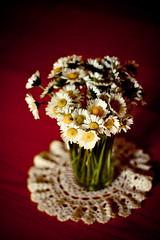 Daisies (annfrau) Tags: flowers daisies vase fiori vaso margherite