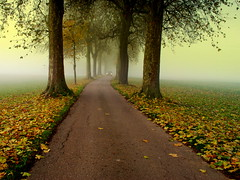 the misty road (mujepa) Tags: road trees mist fall leaves fog perspective route brouillard feuilles brume autumnn