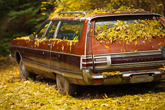 chrysler (try...error) Tags: auto autumn tree fall classic leaves car america canon us leaf backyard 5 herbst machine american 5d oldtimer chrysler 135 fullframe bltter collectable hinterhof 2135 klassiker uscar