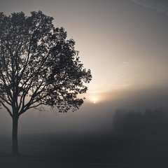 IMG_3497e (through the mist) (ikonoblast) Tags: trees light sunset shadow sky cloud sun black cold tree nature beauty lines sunshine silhouette clouds square dawn freedom landscapes moving poetry mood alone branch sonnenuntergang nebel outdoor availablelight linie meadow wolke peaceful silence melancholy dust vastness everydayobject enlighted nordhessen bestcapturesaoi mygearandmebronze mygearandmesilver mygearandmegold mygearandmeplatinum flickrbronzetrophygroup