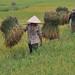 ©FAO/Hoang Dinh Nam / FAO