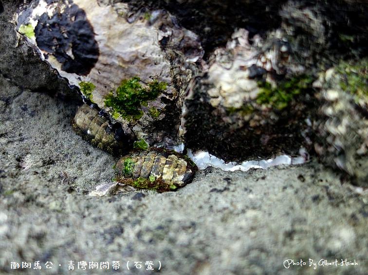 【潮間帶】澎湖馬公.青灣潮間帶(豐富的海洋生態資源)