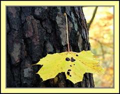 End of season (++Rob++) Tags: trees netherlands forest bomen nederland leafs bos bladeren overveen nederlandvandaag