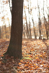 Faget (bortescristian) Tags: city november autumn trees light sunset 2 portrait color colour tree slr nature girl digital forest canon landscape eos photo leaf ray foto fotografie image mark picture natura ii romania imagine mk2 5d mm toamna dslr 50 portret leafs cristian noiembrie 2012 cluj clujnapoca fata roumanie apus raza poza copac copaci oras padure faget bortes bortescristian cristianbortes