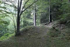 Borjomi, Georgia (ბორჯომი, საქართველო) (bm^) Tags: park travel trees tree zeiss georgia bomen nikon reis boom carl caucasus parc borjomi sakartvelo reizen batumi georgië საქართველო ვარძია ბათუმი planart1450 ბორჯომი d700 zf2 planar5014zf nikond700 начинизавиждане